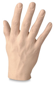 Male Human Hands Image 1631